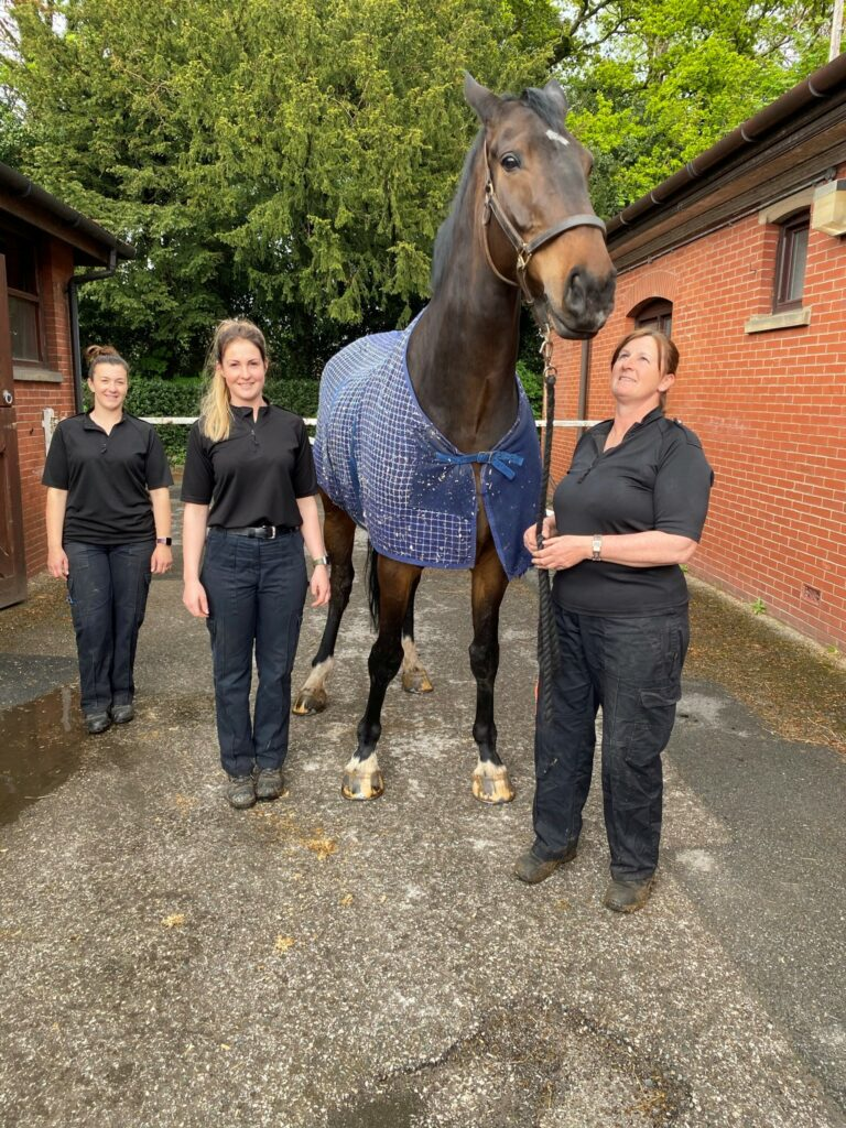 Police Horse Banks